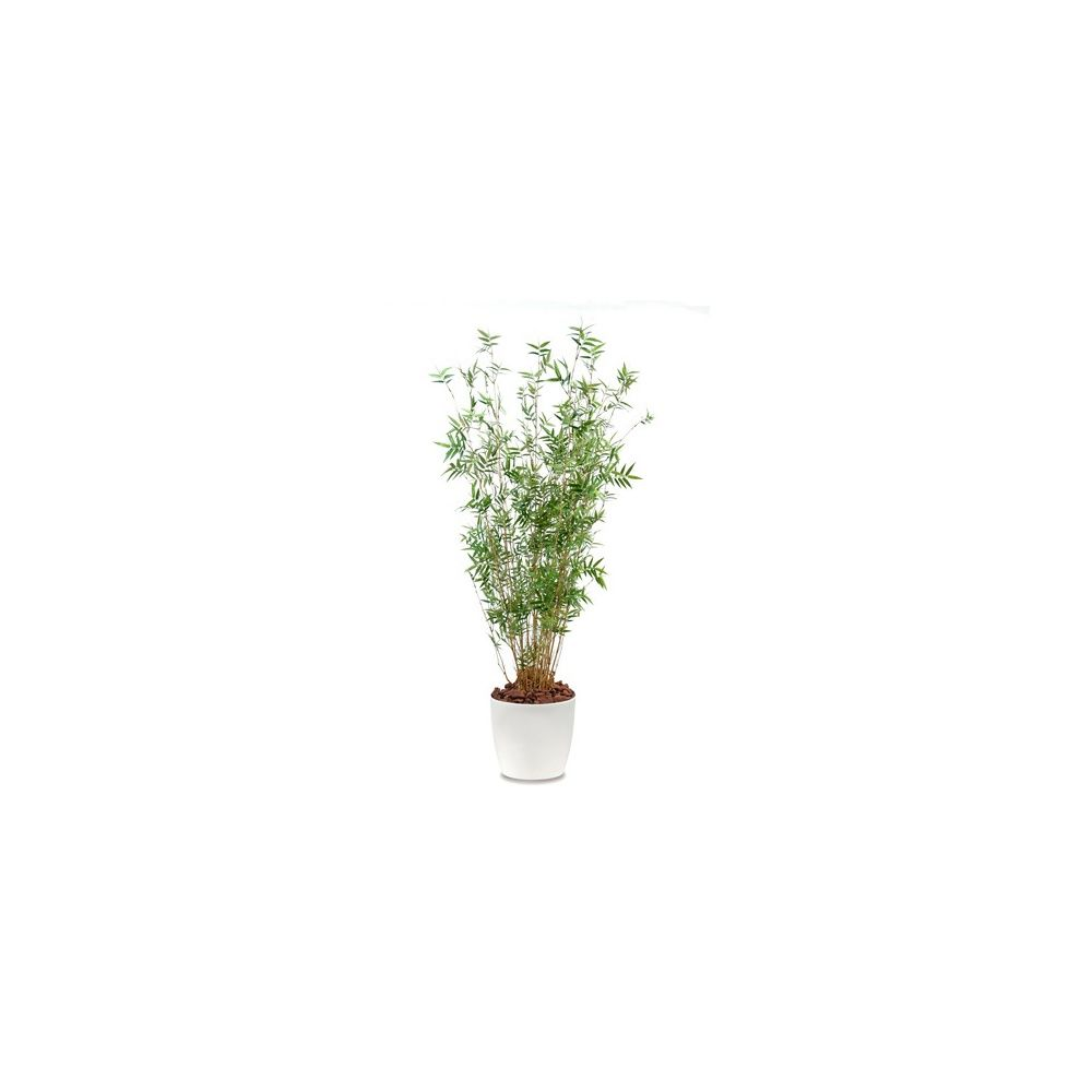 Bambou oriental multi-chaumes H130cm (chaumes naturels, feuillage artificiel) pot Elho blanc