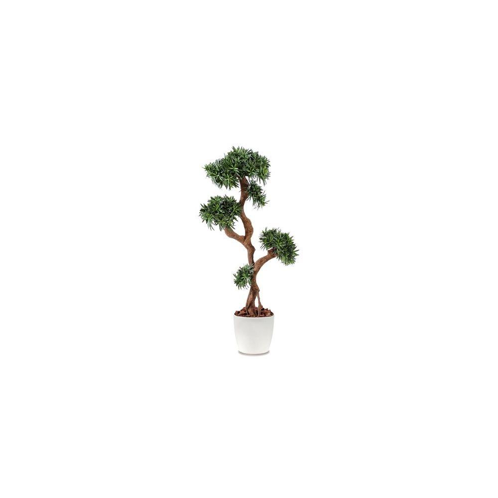 Podocarpus tree, H150cm pot elho blanc