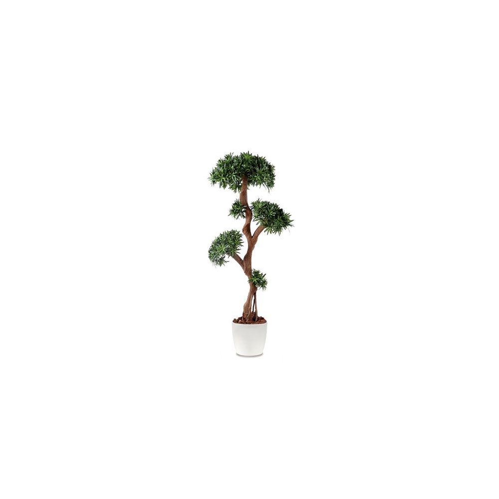 Podocarpus tree, H170cm pot elho blanc