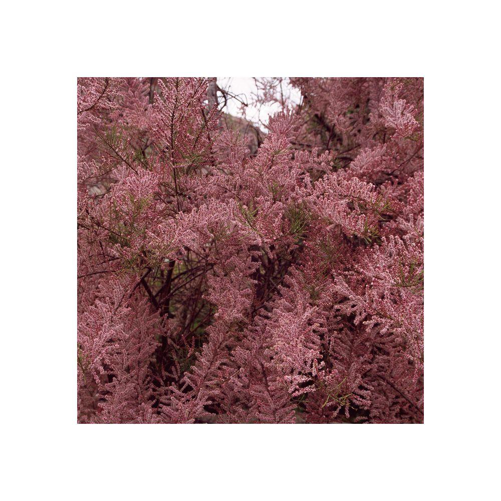 offer discounts cheapest price various colors Tamaris de printemps