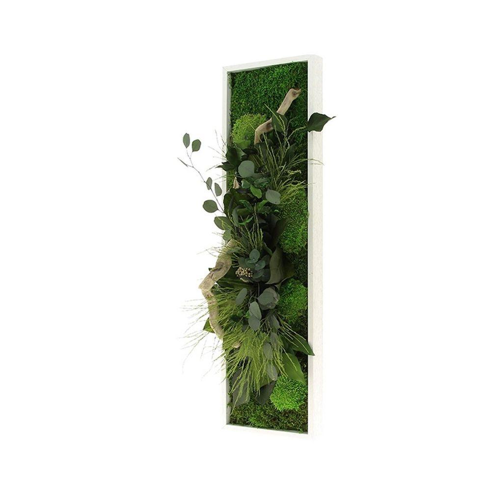 Plantes Pour Tableau Végétal Intérieur tableau végétal stabilisé nature panoramic