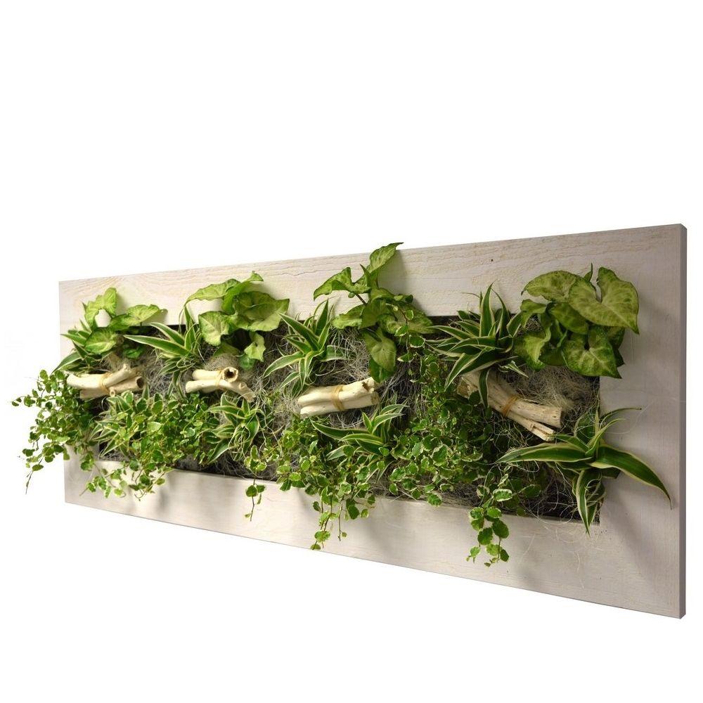 Plantes Pour Tableau Végétal Intérieur tableau végétal wallflower kyoto vieux bois blanchi l