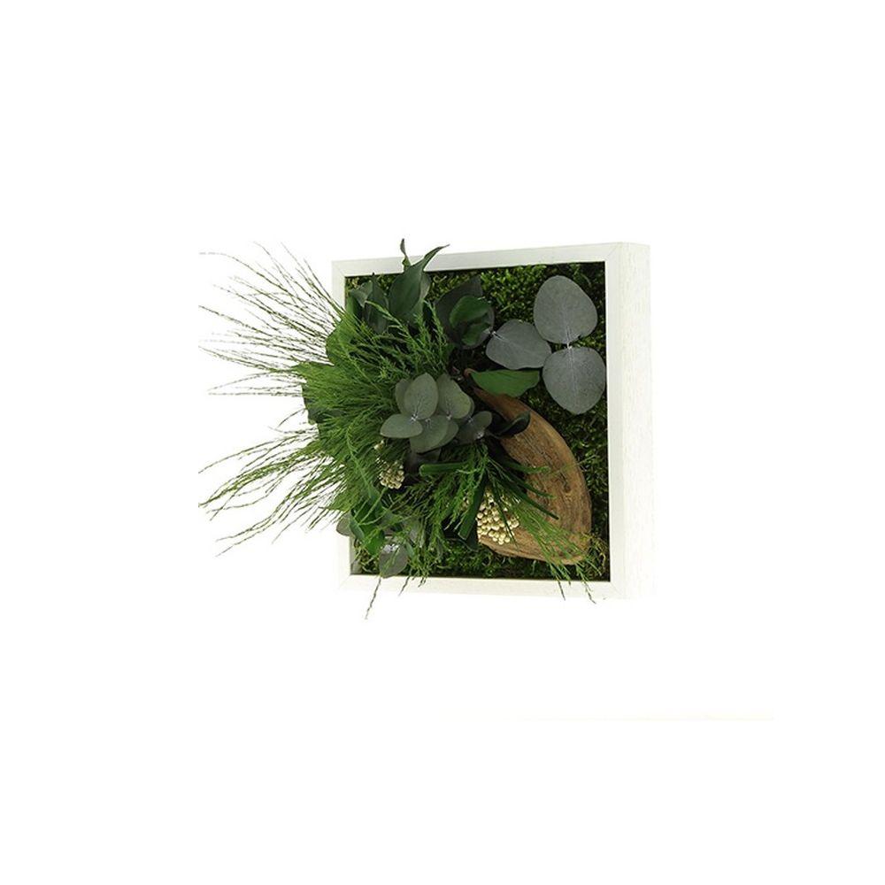 Plantes Pour Tableau Végétal Intérieur tableau végétal stabilisé nature mono