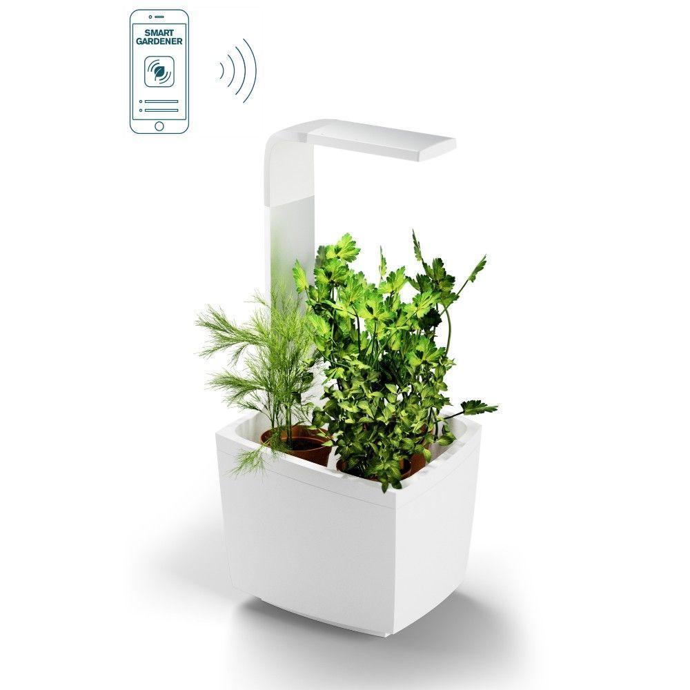 Herbes Aromatiques D Intérieur kit : potager d'intérieur connecté tregren t3 blanc + 4 herbes aromatiques