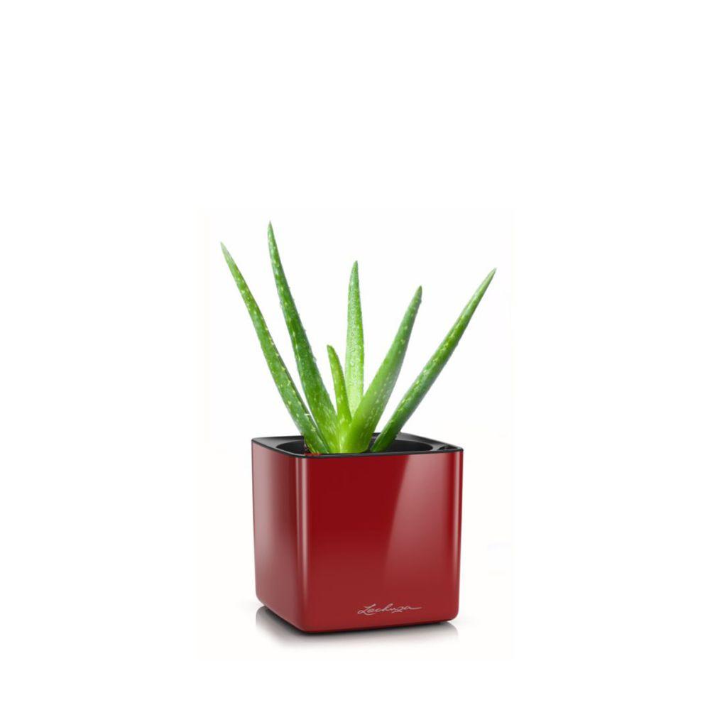 Aloe en pot rouge Lechuza (H.40cm)