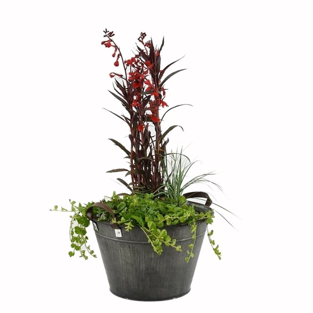 Quelle Plante En Pot Pour Terrasse kit de plante aquatique pour terrasse old grey