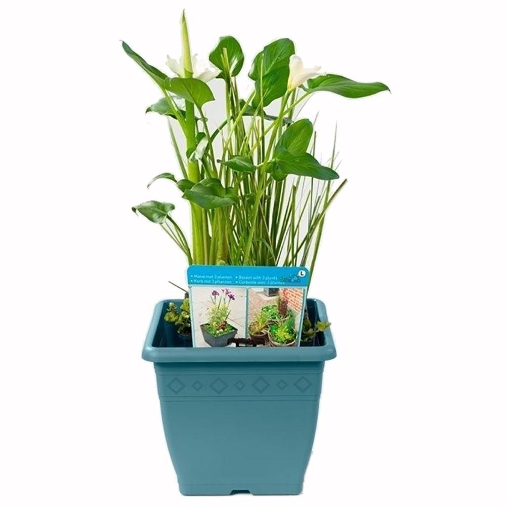 Plante Haute En Pot kit de plante aquatique pour terrasse - 3 plantes + pot gris