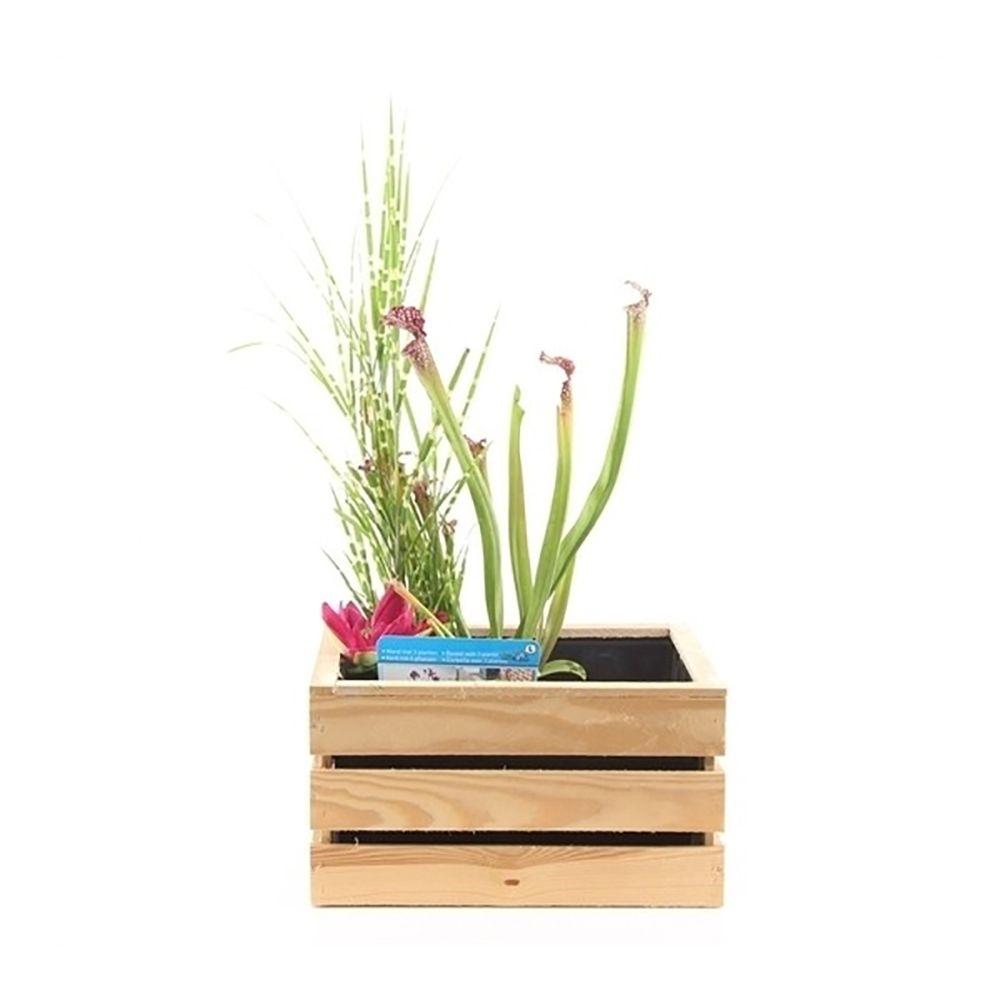 Planter Dans Une Caisse En Bois kit de plante aquatique pour terrasse - caisse bois brut