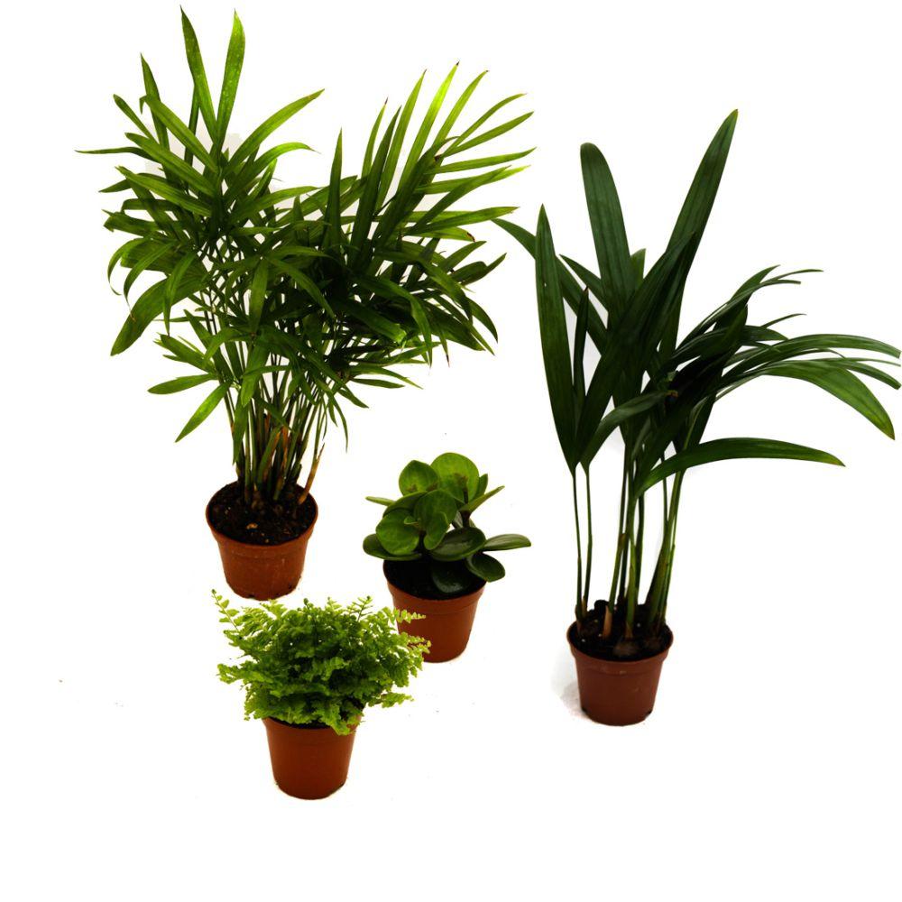 Kit de 4 mini-plantes Jungle
