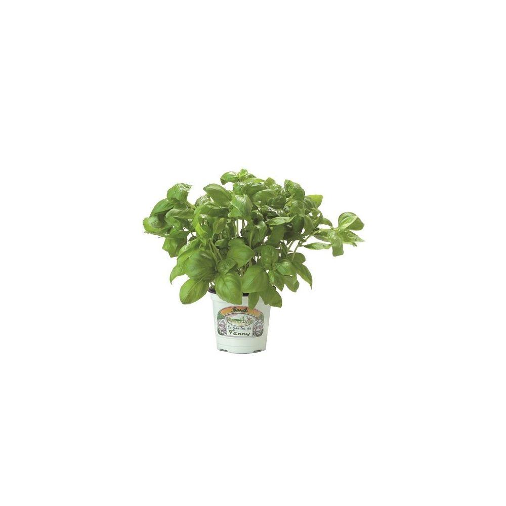basilic pots de gamm vert. Black Bedroom Furniture Sets. Home Design Ideas