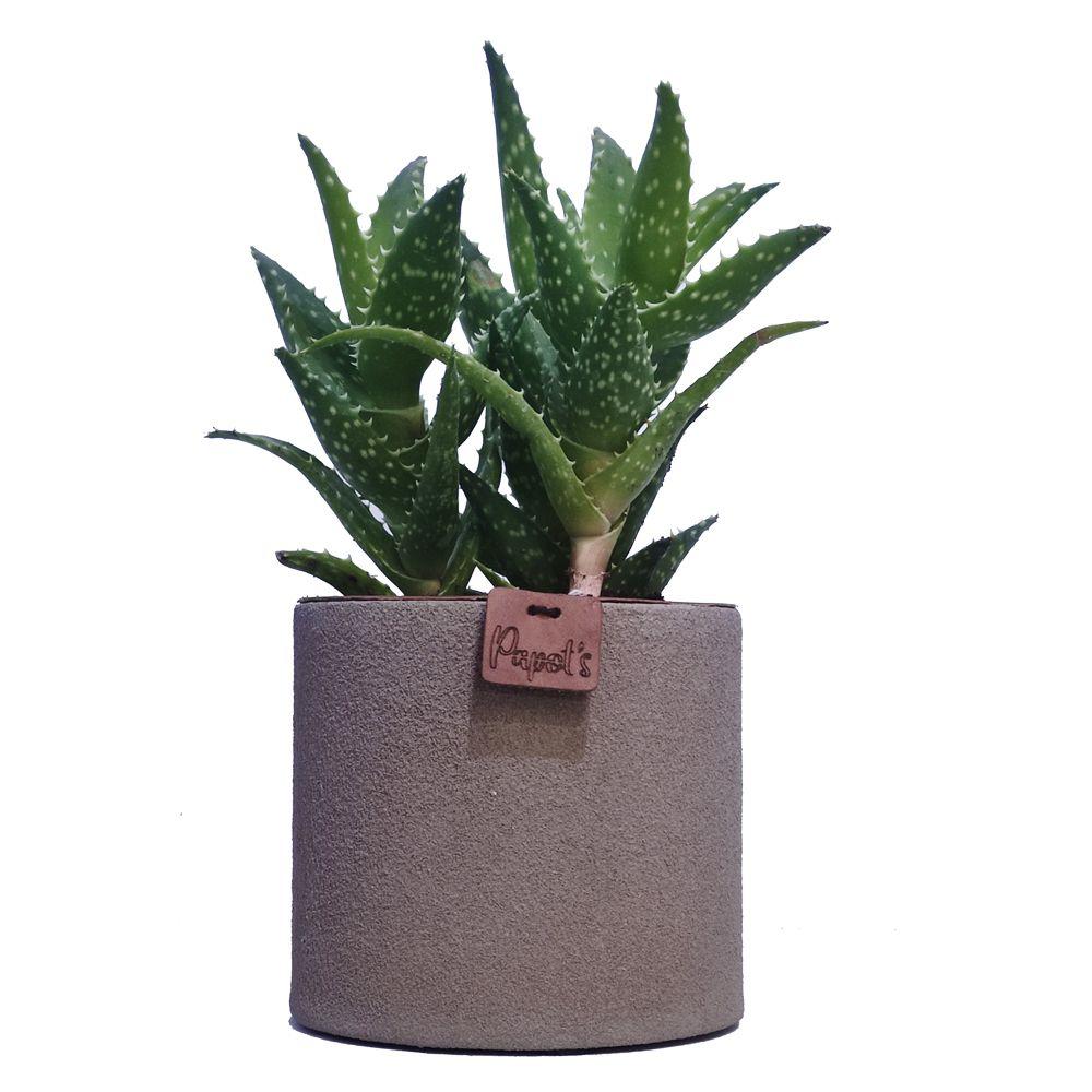 Aloe Mitriformis + cache-pot taupe (H.35cm)