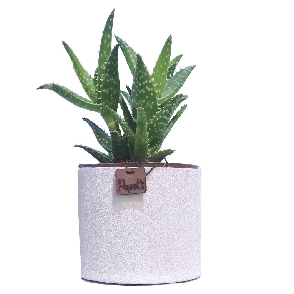 Aloe Mitriformis + cache pot blanc (H.35cm)
