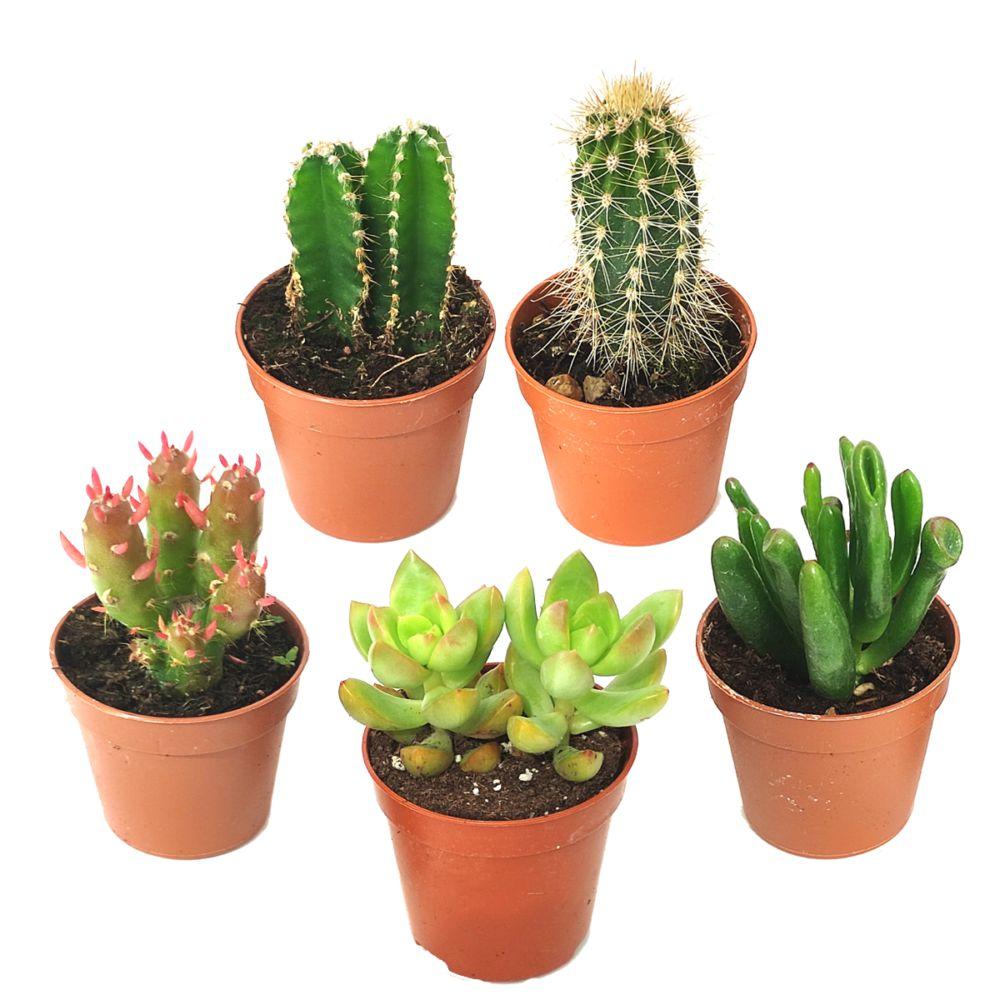 Kit de 5 cactus et succulentes N°9
