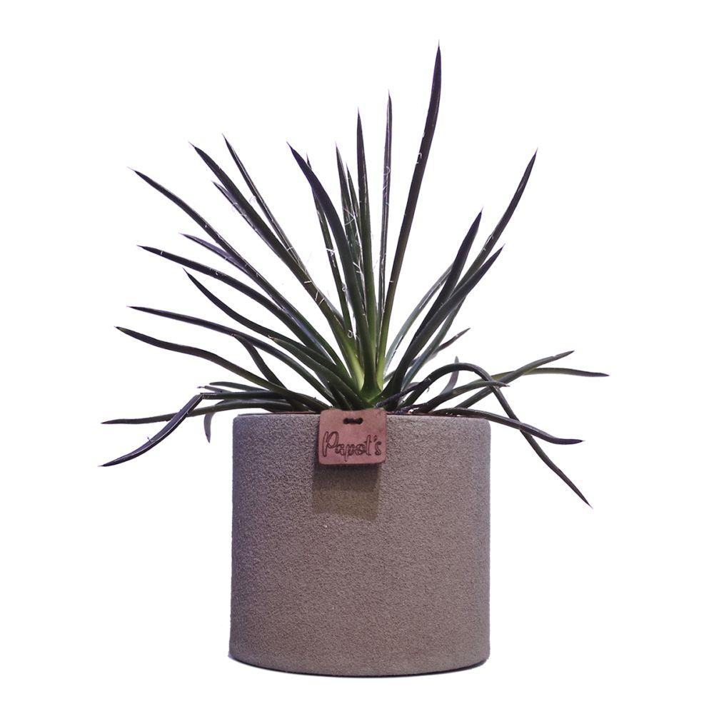 Agave Filifera + cache pot taupe (H.35cm)