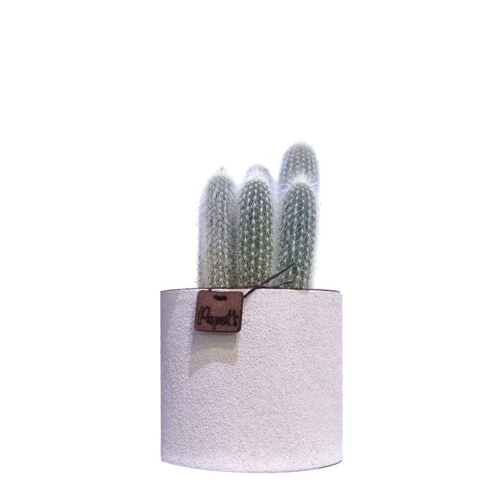 Cleistocactus Strausii + cache pot blanc (H.35cm)