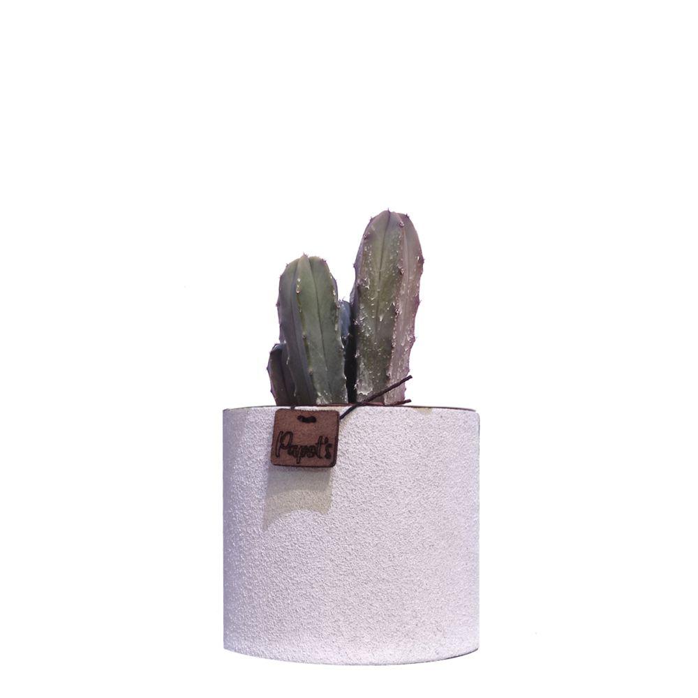 Myrthillocactus Geometrizans + cache pot blanc (H.35cm)