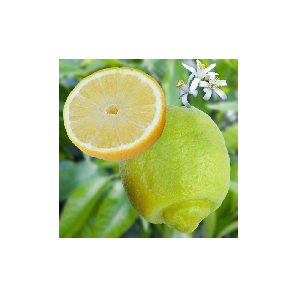Lime douce de Palestine