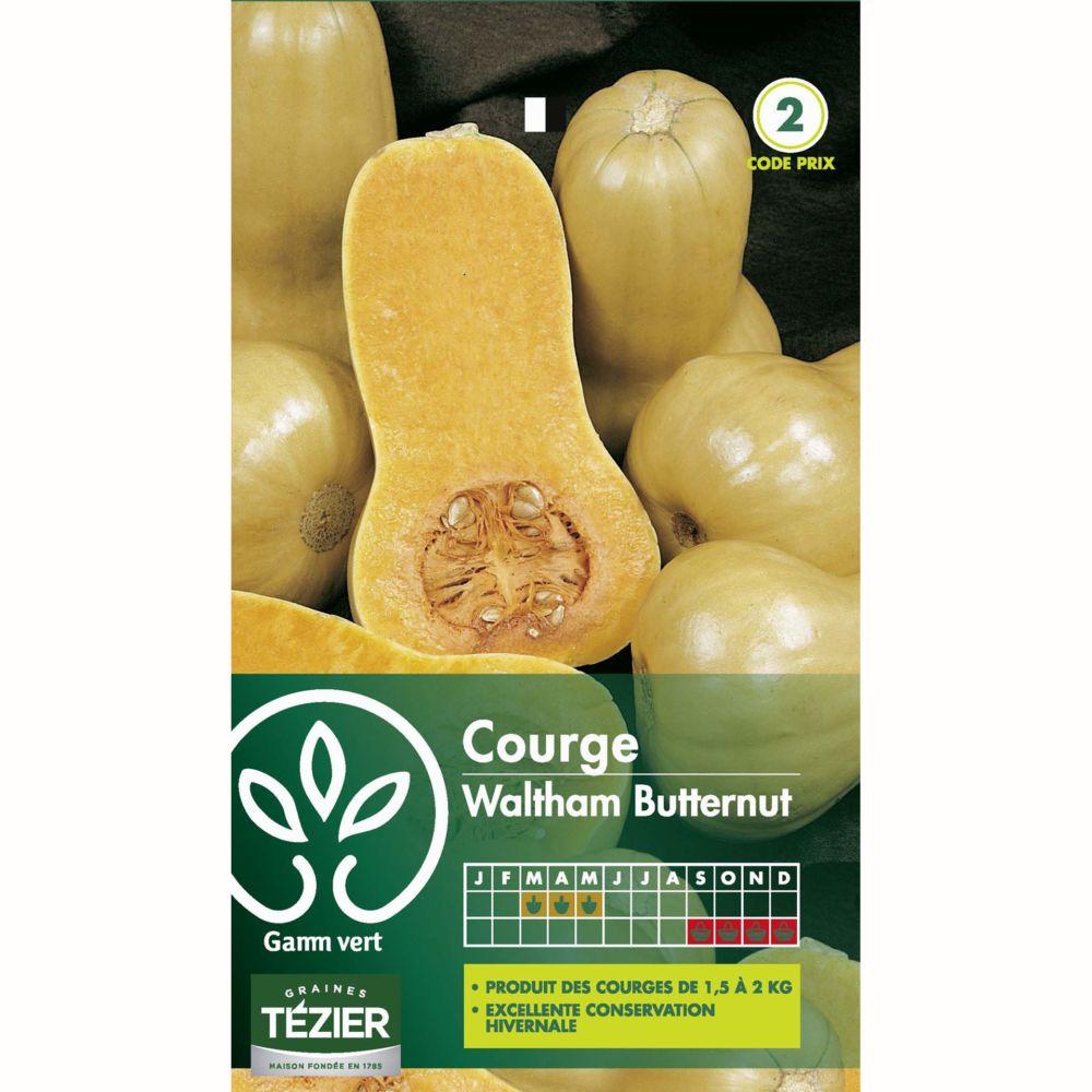 5//25 GRAINES NT de Courge Musquée Spaghetti Potager Légumes Plantes
