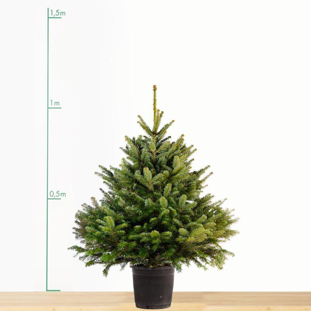 Sapin De Noel Avec Pied prosperveil jupe de sapin de noël 120 cm couvre-pied de