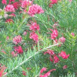 Plantes Mediterraneennes Gamm Vert