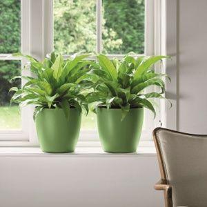 Plantes Vertes Gamm Vert