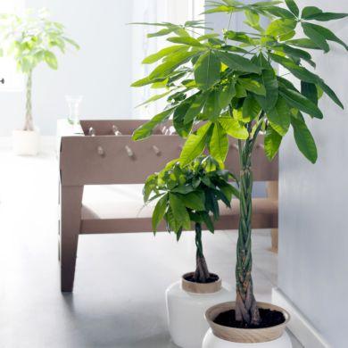 Plantes D Interieur Gamm Vert